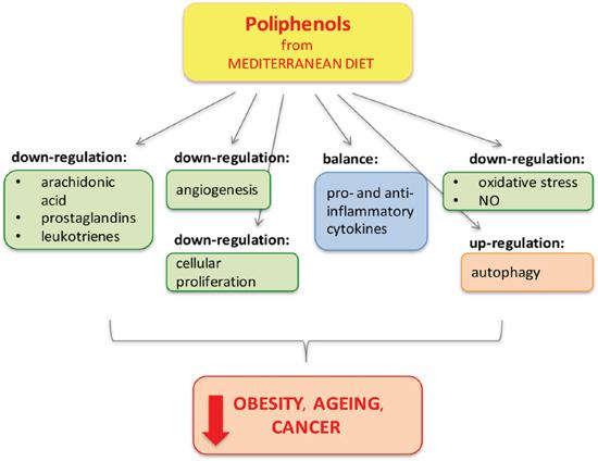 Polyphenols from Mediterranean Diet.