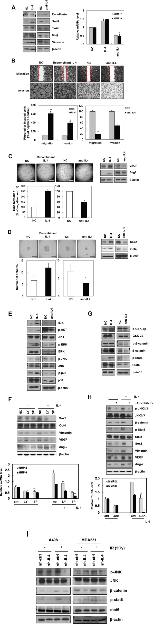 Recombinant IL-4 or neutralization of IL-4 using anti-IL-4 regulates EMT, migration, invasion, angiogenesis, and stemness in cancer cells.