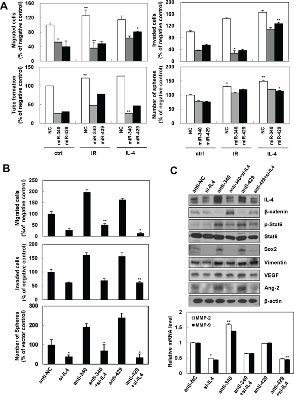 miR-340/429 mimics inhibit IR or recombinant IL-4-induced aggressive properties in the cancer cells.