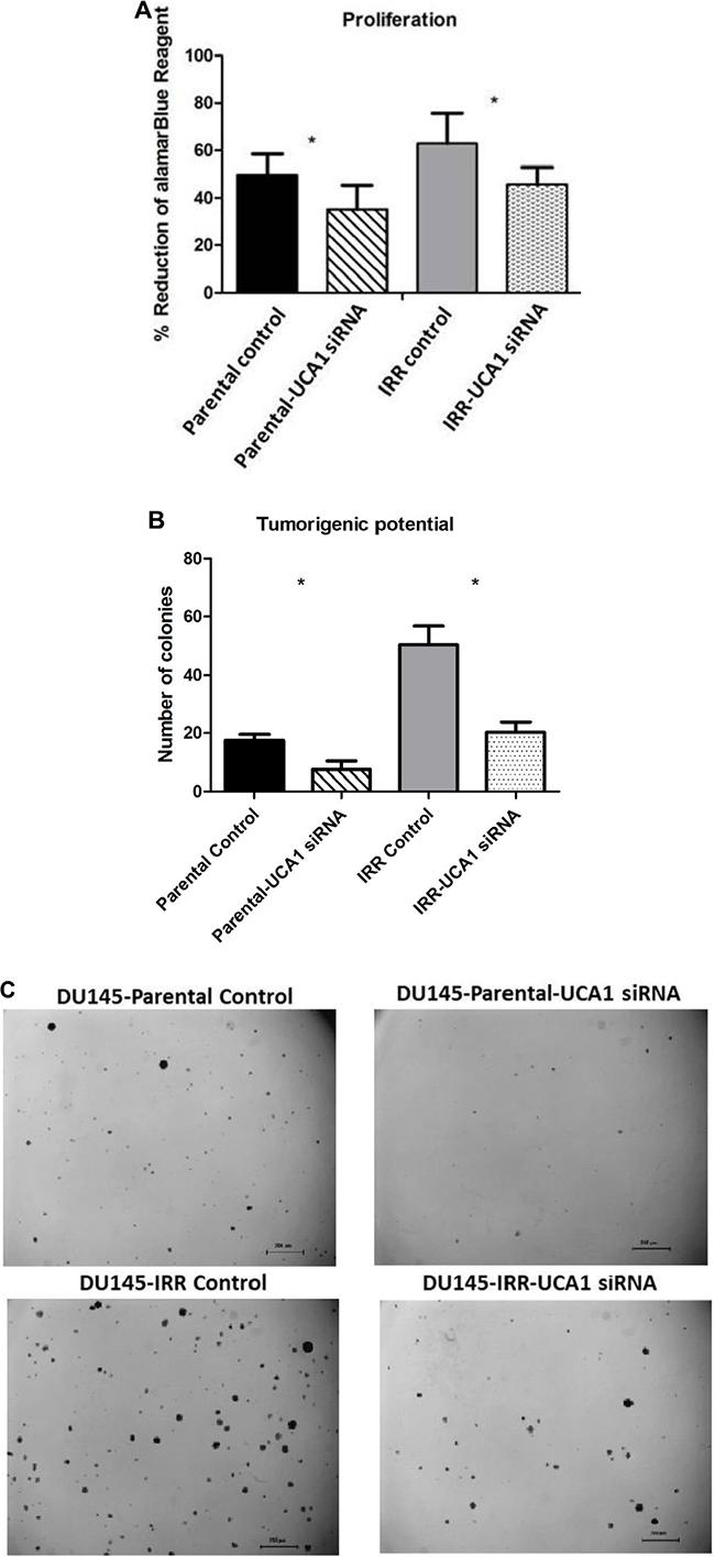 UCA1 knockdown reverses aggressive phenotype.