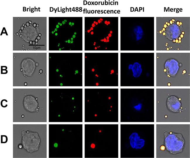 In vitro RDM targeting to Raji cells.