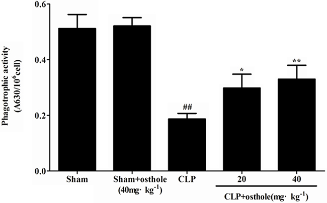 Effect of osthole on peritoneal macrophage phagocytic activity in CLP-induced mice sepsis.
