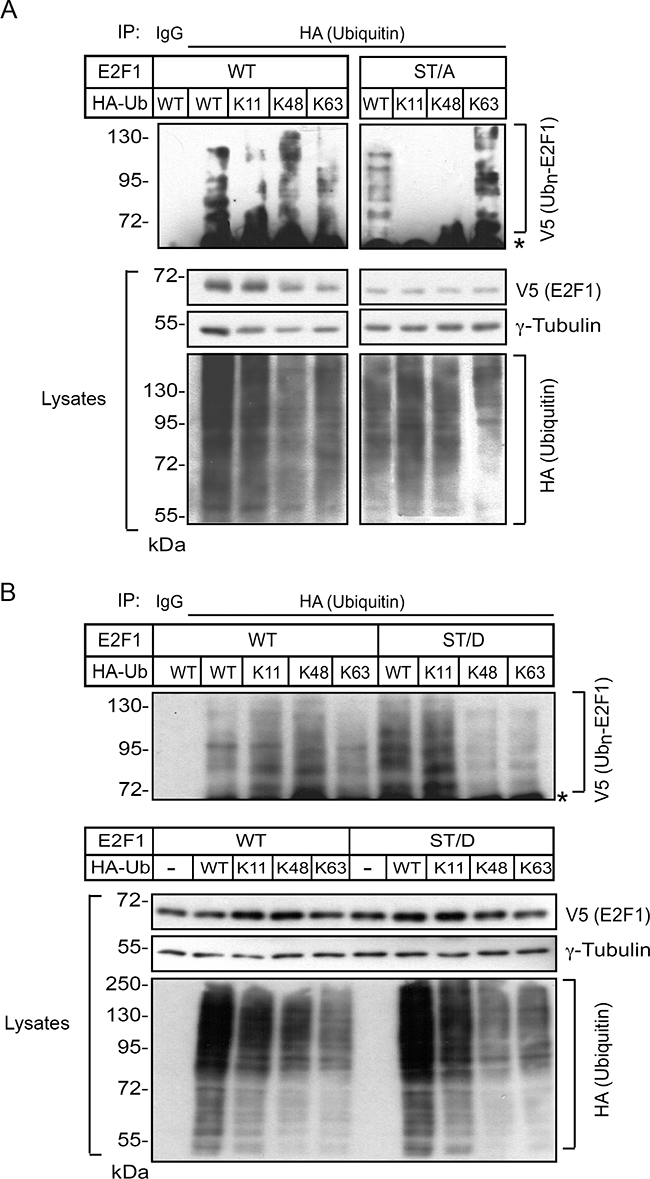 S403 and T433 regulate K11- and K48-linkage ubiquitylation of E2F1 in differentiated keratinocytes.
