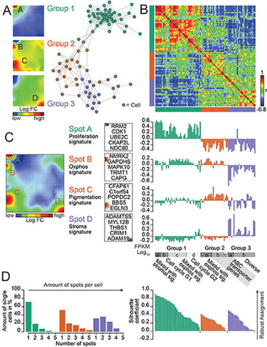 Dissecting Heterogeneity In A BRAF NRAS Wild Type Patient Derived Melanoma Culture Revealed By