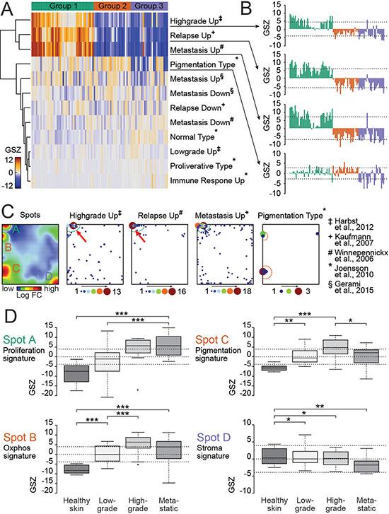 Patient-derived BRAF/NRAS wild type melanoma culture resembles partially primary and metastatic melanoma gene expression signatures.