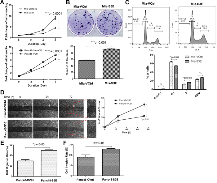 Overexpression of Sema3E in PDAC cell lines increases cell growth, proliferation and clonogenic potential, as well as cell migration.