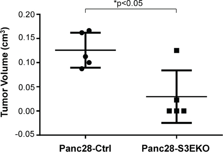 Knockout of Sema3E reduces tumor incidence and tumor growth in vivo.