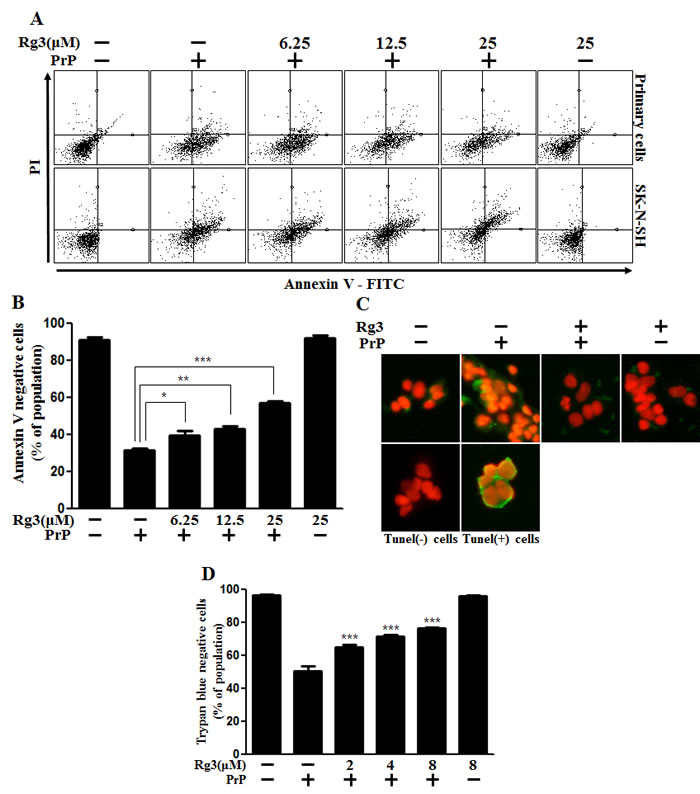 Rg3 inhibits PrP (106-126)-induced cytotoxicity in neuronal cells.