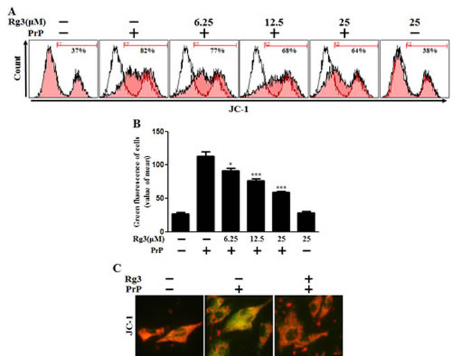 Rg3 inhibits PrP (106-126)-induced mitochondrial dysfunction in neuronal cells.