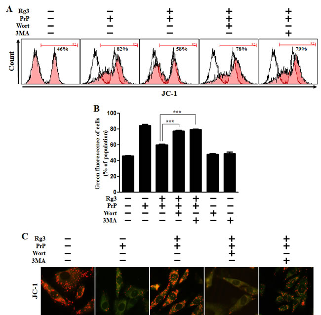 Rg3 recovers prion-induced mitochondrial dysfunction in neuronal cells via autophagy.