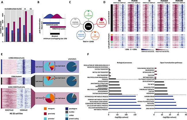 Genome-wide identification of high-confidence bivalent domains in human ES cells.
