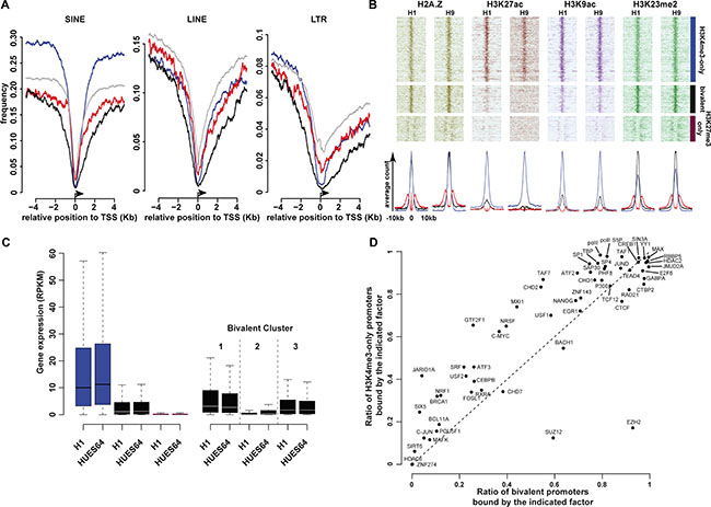 Main molecular signatures associated with high-confidence H3K4me3-only, bivalent and KH3K27me3-only regions.