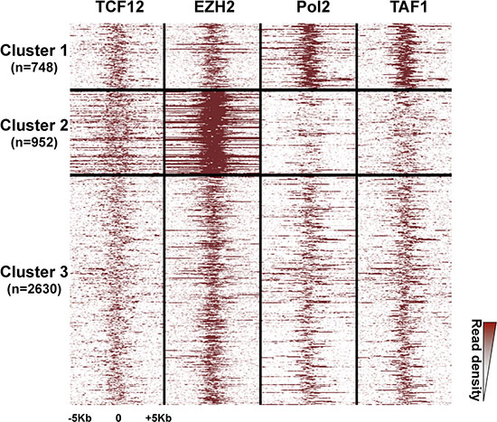 Three clusters of high-confidence bivalent promoters in human ES cells.