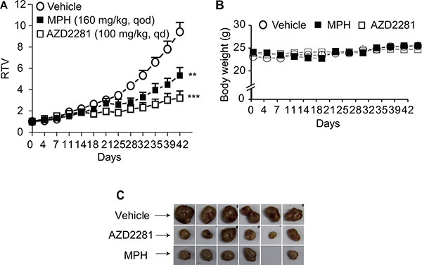 The in vivo anti-tumor efficacy of MPH in breast cancer patient-derived xenograft (PDX) model.