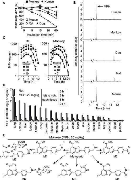 Pharmacokinetics of MPH.