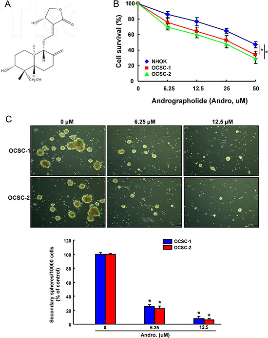 The cytotoxicity and effect of andrographolide on OCSCs self-renewal property