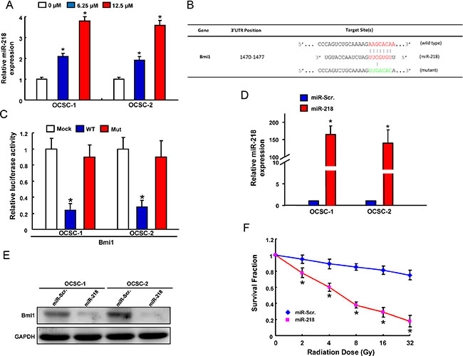 Identification of Bmi18 as a direct target of miR-218 in OCSCs