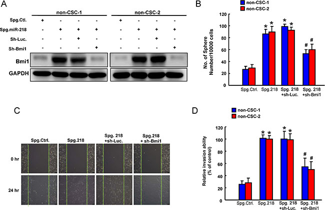 Involvement of Bmi1 in tumor suppressive function of miR-218