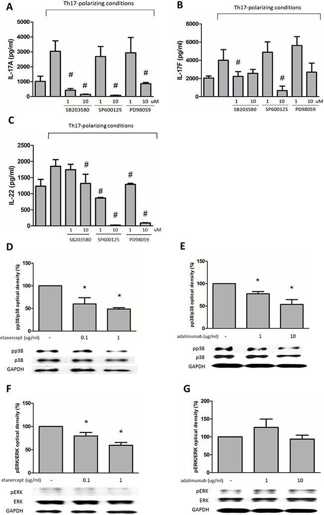 The suppressive effects of etanercept and adalimumab on IL-17A, IL-17F and IL-22 expression in human Th17-polarized cells through MAPK pathways.