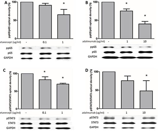 Etanercept and adalimumab downregulate NFκB and STAT3 expression in human Th17-polarized cells.