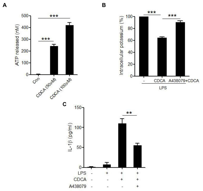 CDCA induces ATP release from macrophages.