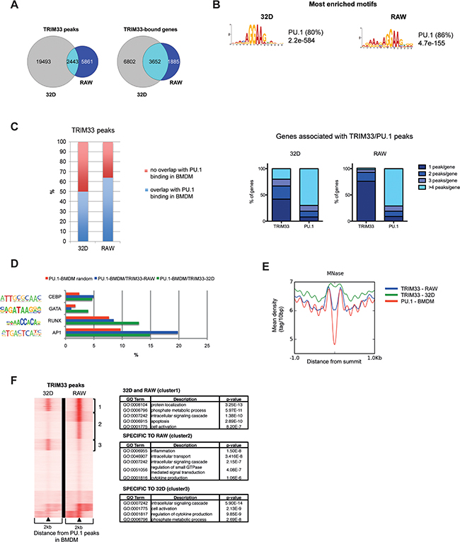 Dynamics of TRIM33 binding in myeloid cell lines.