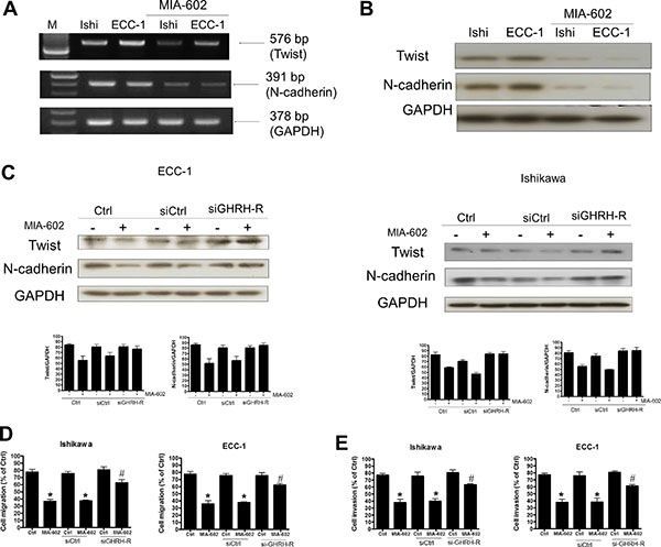 The effects of the GHRH antagonist (MIA-602) on Twist and N-cadherin signaling in endometrial cancer cells.