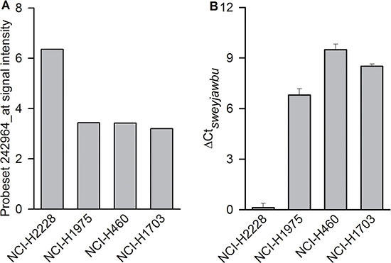 Differences observed between ALK rearrangement-positive (NCI-H2228) and ALK rearrangement-negative (NCI-H1975, NCI-H460, and NCI-H1703) lung cancer cells.