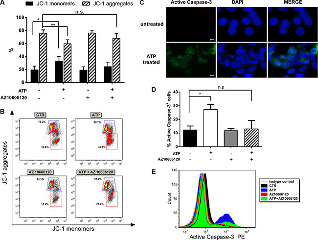 P2X7 activation induces mitochondrial stress and activation of caspase cascade.