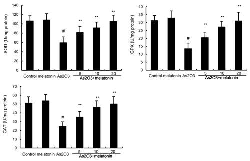 Oncotarget | Melatonin protects against arsenic trioxide