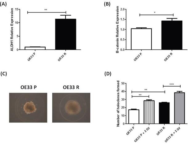 OE33 R cells demonstrate enhanced 'stemness' properties.