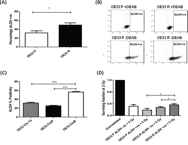 Radioresistant and cisplatin-resistant EAC cells have increased ALDH enzymatic activity, and is associated with a radioresistant phenotype.