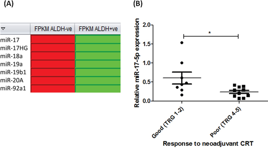 miR-17-5p is decreased in radioresistant EAC cells in vitro and in vivo.