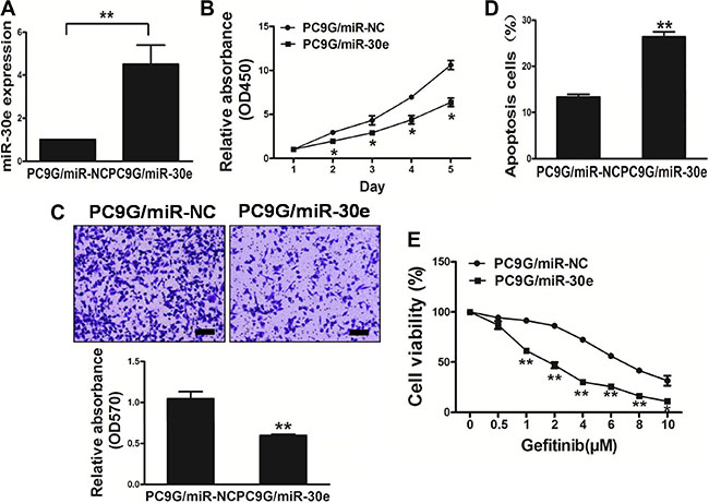 MicroRNA-30e overexpression in the PC9G cell linereduces cell proliferation andmigration, and reverses drug resistance to gefitinib.