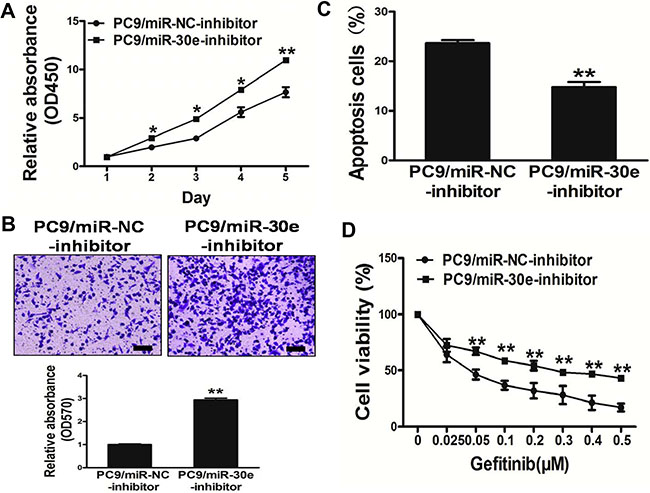 Repression of miR-30e in PC9 cells significantlypromotes cell growth and migration, and confers resistance to gefitinib.