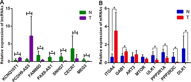 Validation of expression of significant lncRNAs and mRNAs by qRT-PCR.