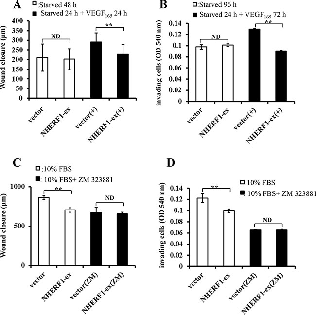 NHERF1 inhibited the migration and invasion of RKO cells through VEGFR2 signaling pathway.