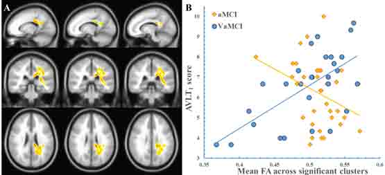 Oncotarget | How does white matter microstructure differ
