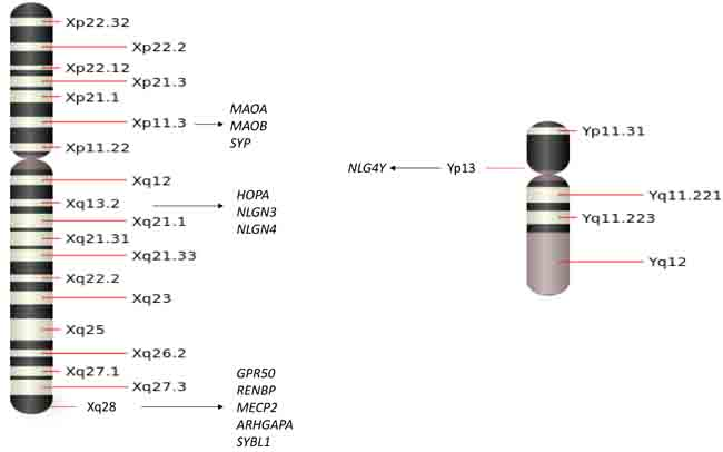 Oncotarget   Sex chromosome abnormalities and psychiatric
