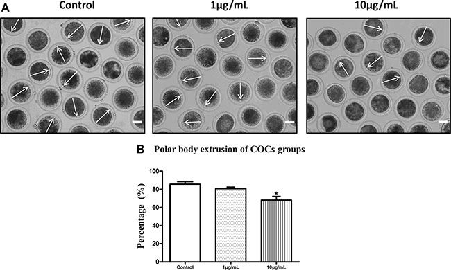 Lipopolysaccharide exposure reduced the polar body extrusion rate of bovine oocytes.