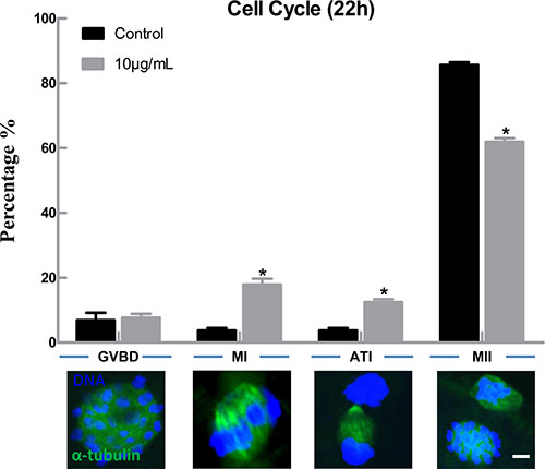 Lipopolysaccharide exposure delayed the cell cycle progression during oocyte maturation.