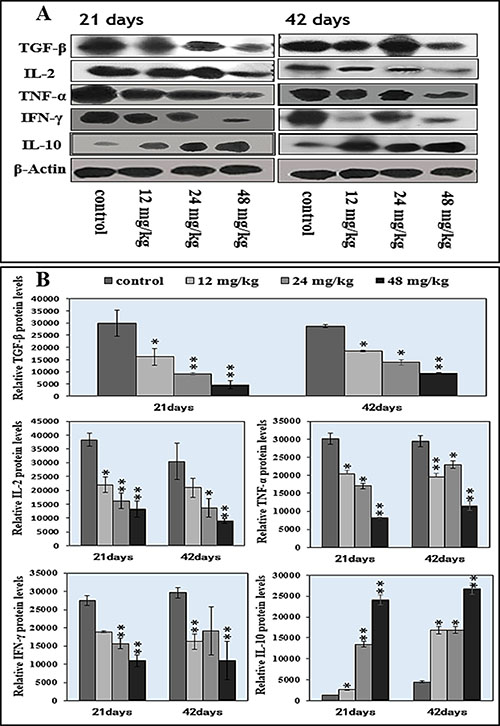 Changes of splenic cytokine protein expression levels by western blot.