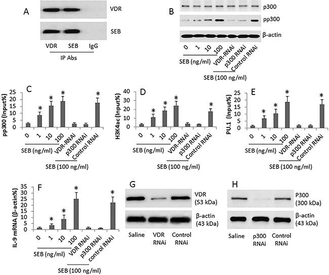 SEB regulates IL-9 gene expression in CD4+ T cells.