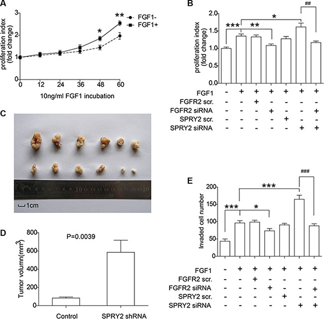 SPRY2 could suppress FGFR2-induced cell proliferation and invasion of gastric adenocarcinoma.