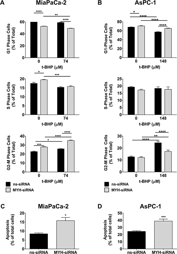 MYH knockdown alters cell cycle and induces apoptosis in pancreatic cancer cells.