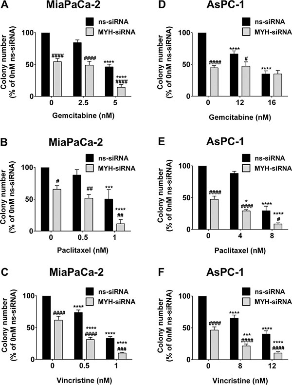 MYH knockdown reduces pancreatic cancer cell clonogenicity and increases chemosensitivity.