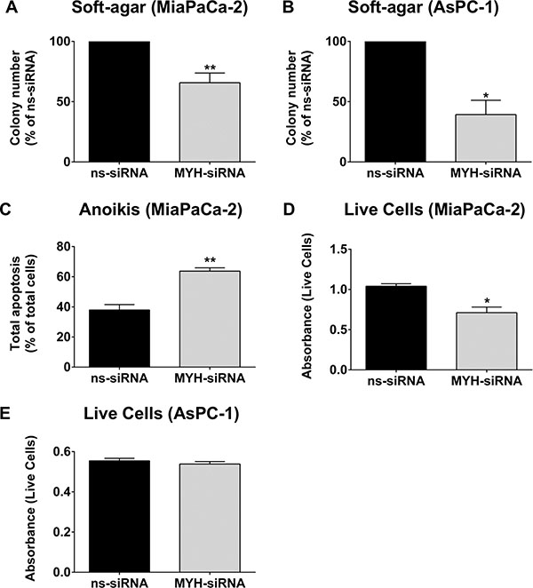 MYH knockdown reduces pancreatic cancer cell metastatic potential.