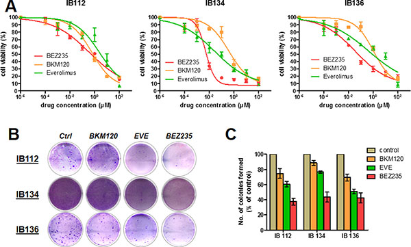 Antiproliferative and apoptotic activities of BEZ235, BKM120 and everolimus (EVE) in LMS cell lines.