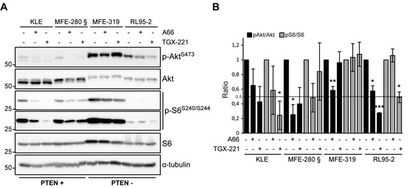 Heterogeneous response on Akt and S6 signaling following p110α and p110β inhibition.