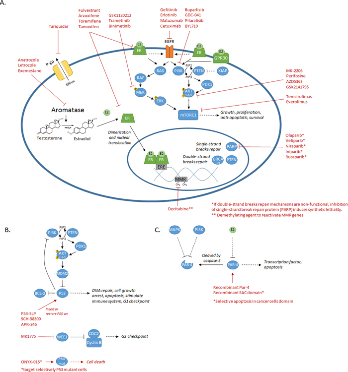 Summary of the diverse mechanisms/pathways involved in chemoresistance and their associated targeted treatments.